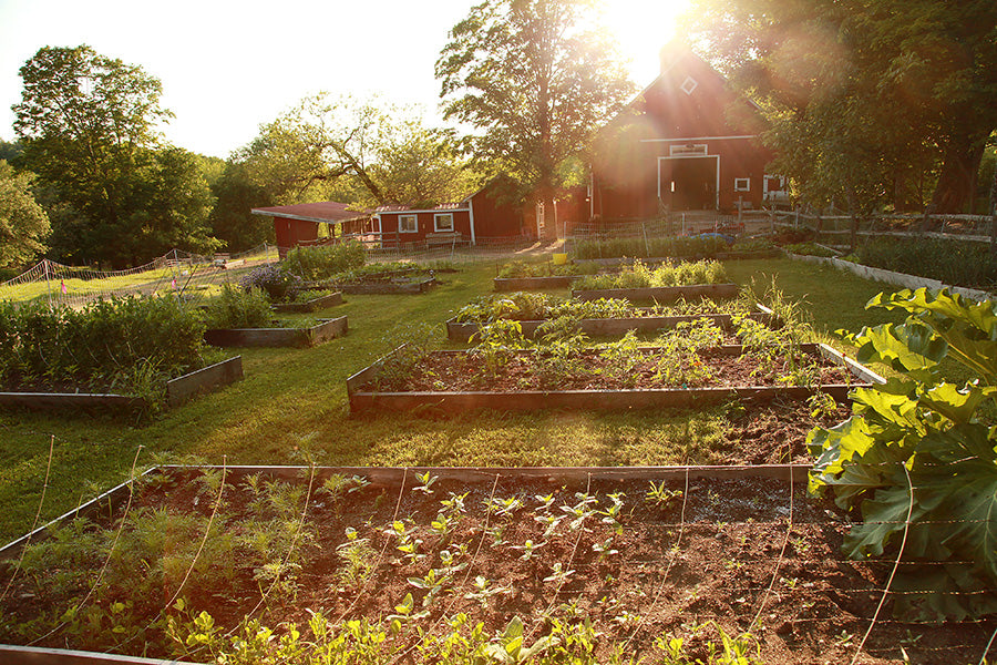 June Family Farm Weekend! Friday & Saturday nights, June 12-13, 2020