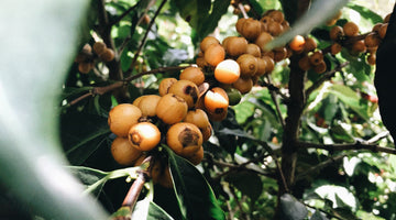 Everything you need to know about coffee varieties