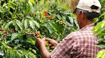 From Your Cup to Colombia: visit the plantations