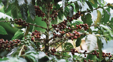 Reduce your ecological footprint, one coffee at a time