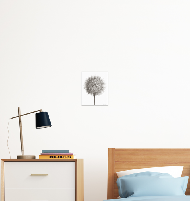 Dandelion Fluff on White Wall Art <br>(55158)<br> - New Depictions | Wall Art Prints