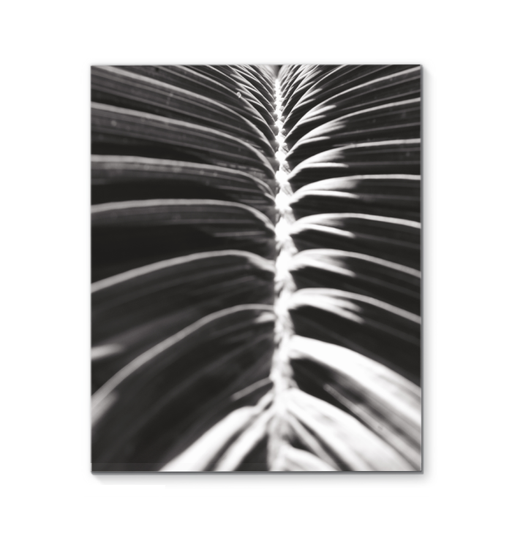 Palm Detail II BW Wall Art <br>(56305)<br> - New Depictions | Wall Art Prints