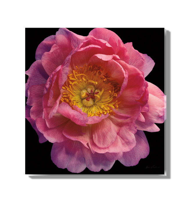 Floral Majesty II Wall Art <br>(57678)<br> - New Depictions | Wall Art Prints