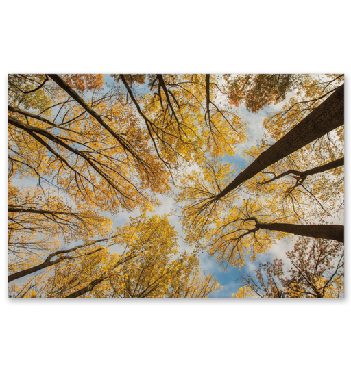 Towering Trees III Wall Art <br>(53651)<br>