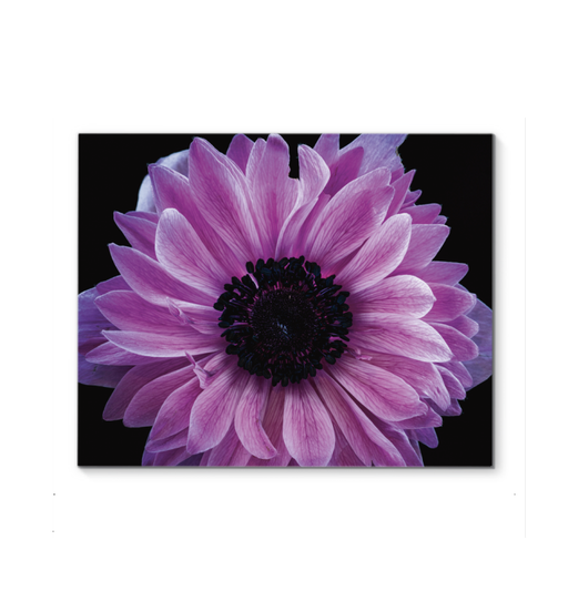 Purple Anemone Wall Art <br>(58083)<br>