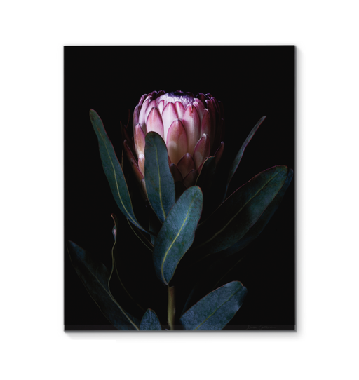 Protea Portrait Wall Art <br>(58072)<br> - New Depictions | Wall Art Prints