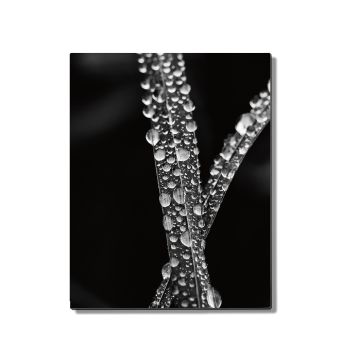 Water Droplets Wall Art <br>(55304)<br> - New Depictions | Wall Art Prints