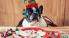 Christmas foods that are toxic to dogs
