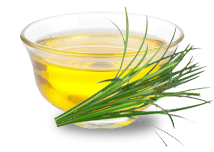 lemongrass bunch and oil in a clear glass bowl