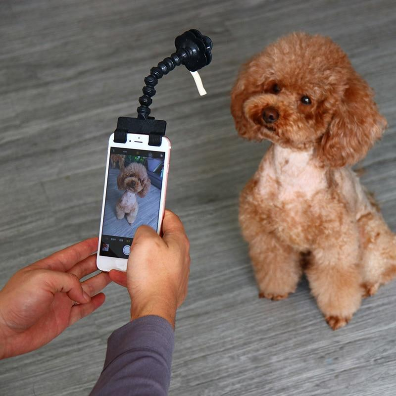 Taking a photo of a  brown poodle with Pet Selfie Stick