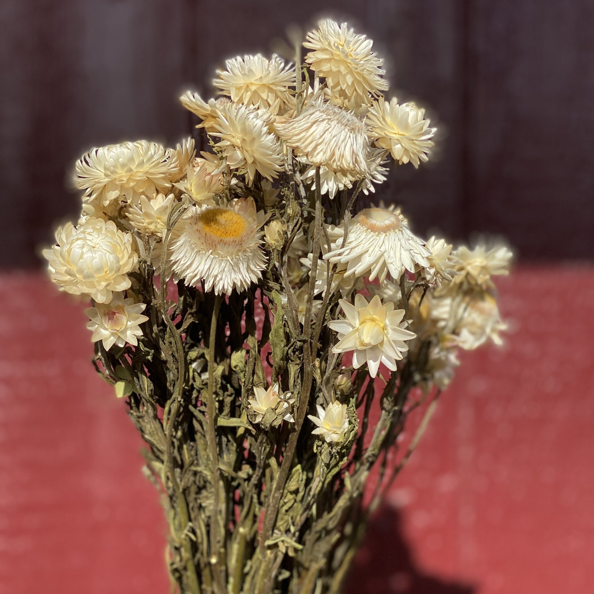 Dried Flowers-Strawflower White