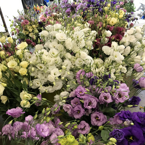 Lisianthus at your Door - Shipping Single Box