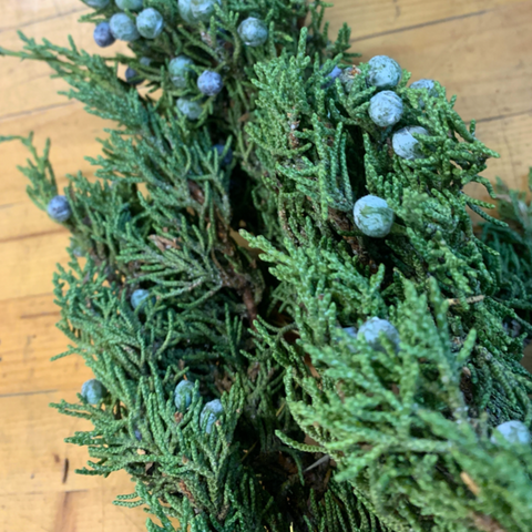 Evergreens Bundle-Berried Juniper