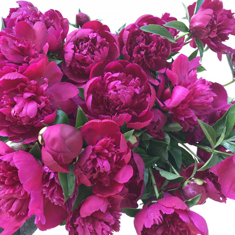 Peony Love at your Door - Shipping Single Box