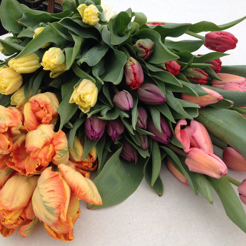 Tulips at your Door - Shipping Single Box