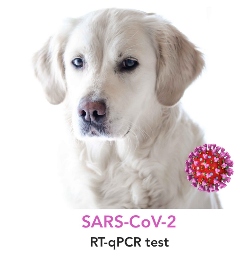 SARS-CoV-2 molecular testing for Dogs