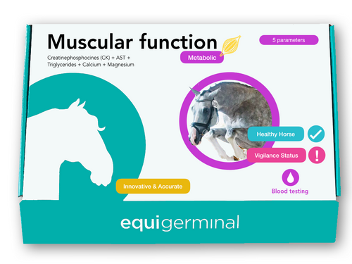 Muscular function