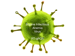 Equine Infectious Anemia, RT-qPCR