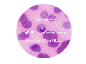 Theileria equi, qPCR - detection and quantification