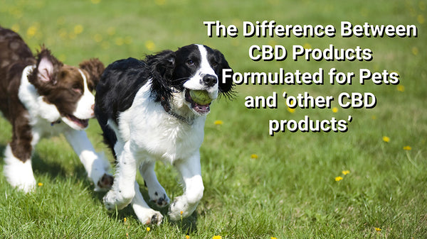 CBD for pets vs. generic CBD