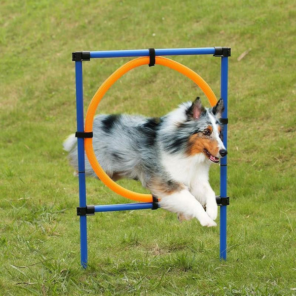 Outdoor Pet Dog Agility Exercise Jump Game Pole Set with Carrying Case-Oberlo-forgift.online