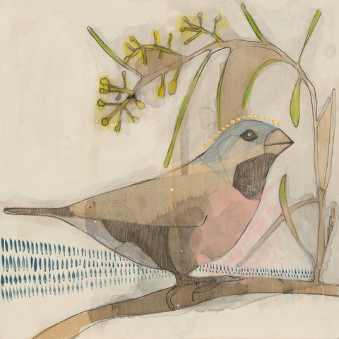 black throated finch and acacia mini print