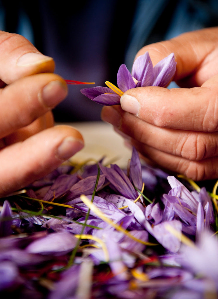 An Intimate Look at Italy's Saffron Harvest - NY Times