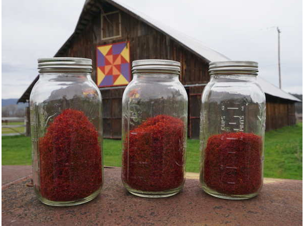 Peace and Plenty Farm brings saffron growing to Lake County