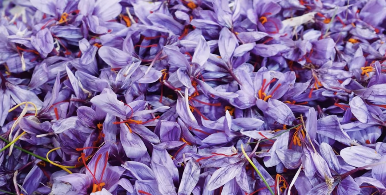 Video: Why Saffron is So Expensive – Business Insider