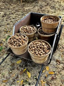 Certified Organic Heirloom Walnuts