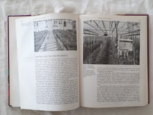 Load image into Gallery viewer, Diseases of Greenhouse Plants by J. T. Fletcher