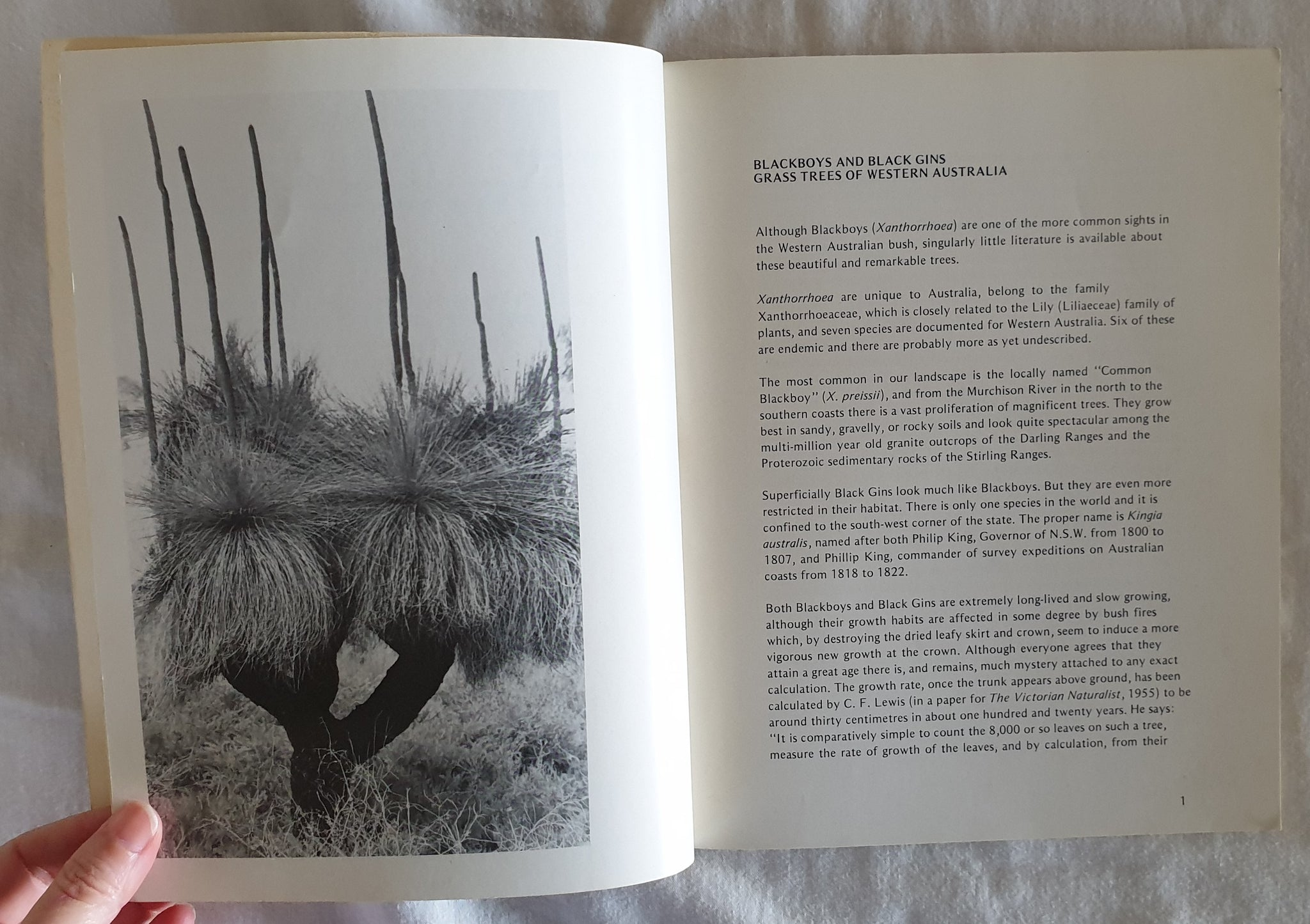 Grass Trees of Western Australia by Hal Missingham