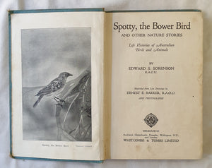 Spotty, the Bower Bird  And Other Nature Stories  by Edward S. Sorenson  illustrations by Ernest E. Barker