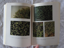Load image into Gallery viewer, Mosses of South Australia by D. G. Catcheside
