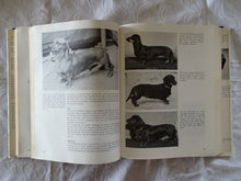 Load image into Gallery viewer, The World Encyclopedia of Dogs by Ferelith Hamilton