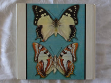 Load image into Gallery viewer, Australian Butterflies in Colour by Alexander Burns