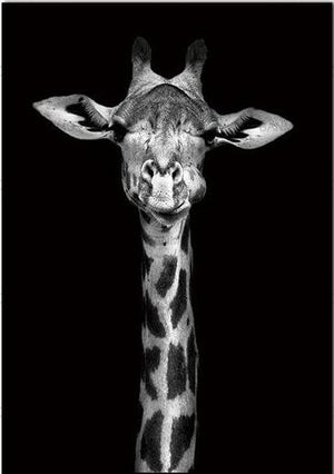 Open image in slideshow, Giraff -Black and White Animal Canvas Print Collection