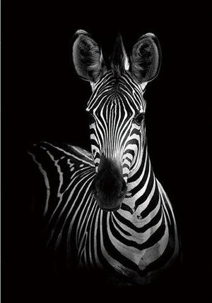 Open image in slideshow, Frontal-Zebra Black and White Animal Canvas Print Collection