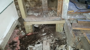 BLOG 5 Beetles, Termites and Dry Rot, OH MY!  (Living Room)