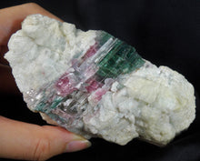 Natural Bicolor Watermelon Tourmaline Quartz Crystal Mineral Specimen TMLW10114