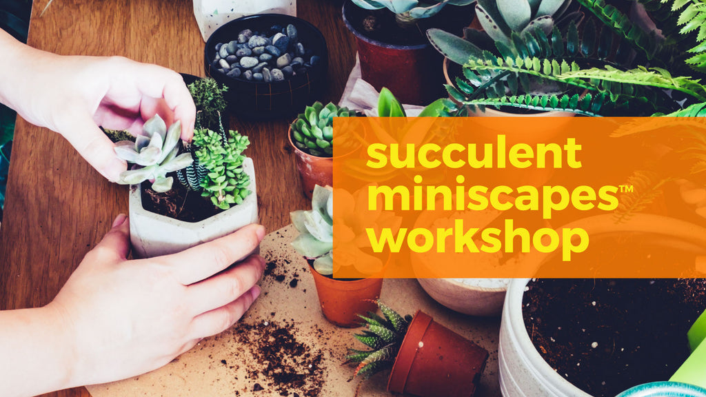 succulent workshop singapore