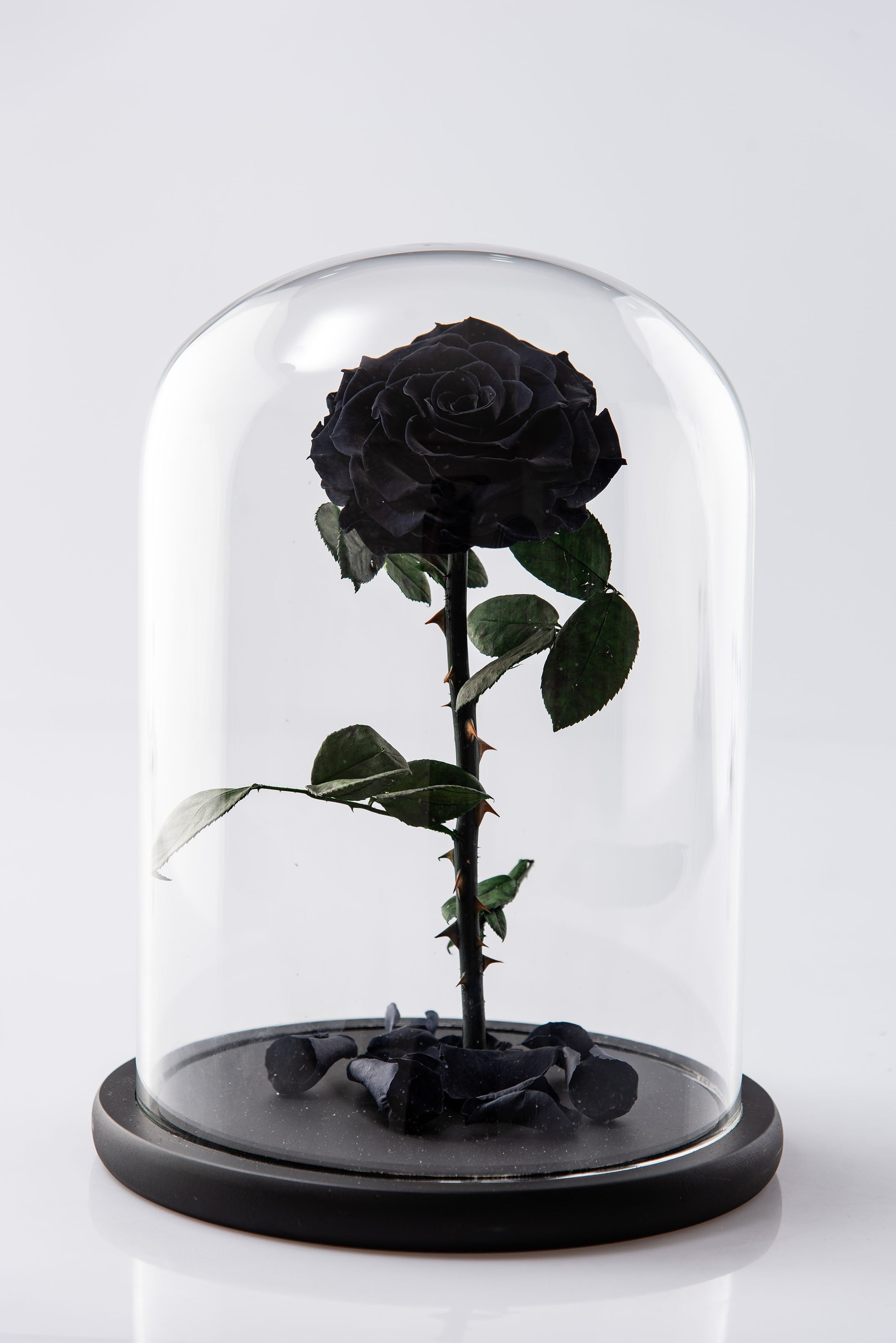 Preserved Long Lasting Black Roses