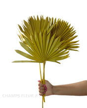 Naturally Dried Palm - 3 Stems