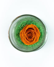 Infinity Roses in a dome (Verre Mini)