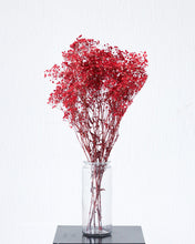 Red Preserved Baby's Breath