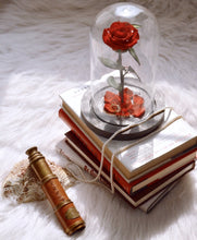 Red Rose in a Glass Dome (Wondertale) - Delhi Delivery