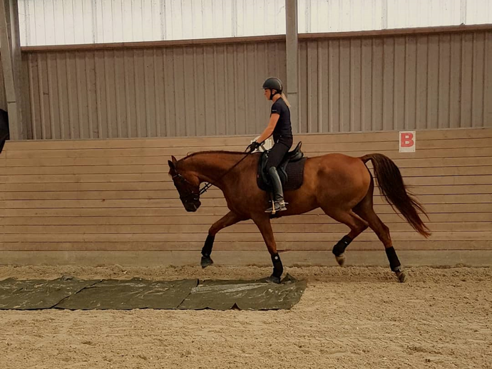 Guest Post: Dressage Competition Training Tips
