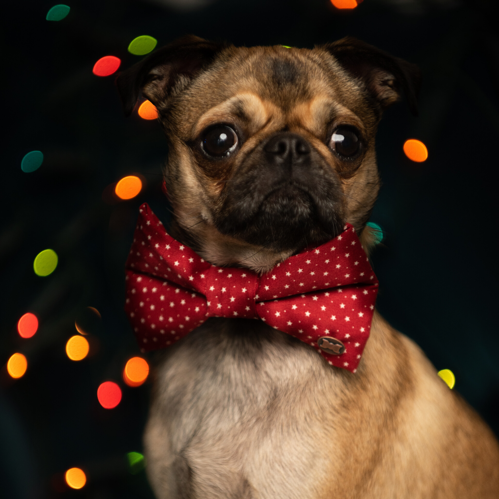 Christmas Star Red Dog Bow Tie