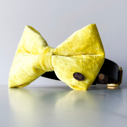 Yellow velvet dog bow tie in large