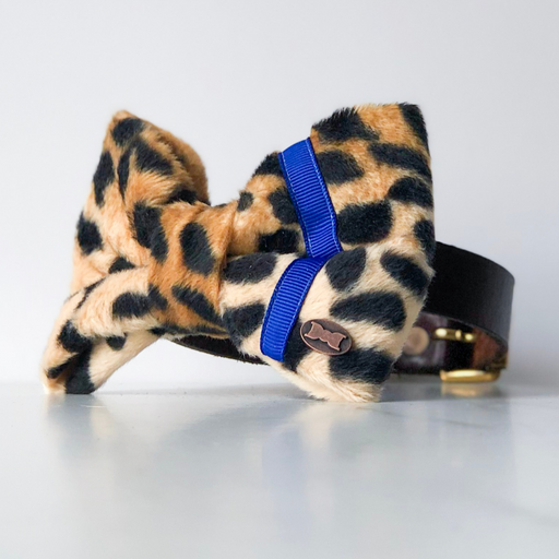 Leopard and blue neon dog bow tie in large